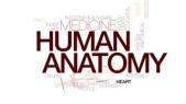 human-anatomy-animated-word-cloud-text-design-animation-kinetic-typography_rlwcvvcvg_thumbnail-small05
