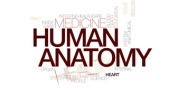 human-anatomy-animated-word-cloud-text-design-animation-kinetic-typography_rlwcvvcvg_thumbnail-small05