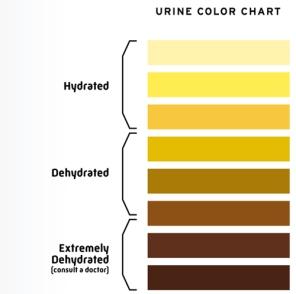 urine-hydration